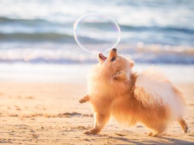 Топ-10 фотографий из Всемирного фотоконкурса собак 2018 года