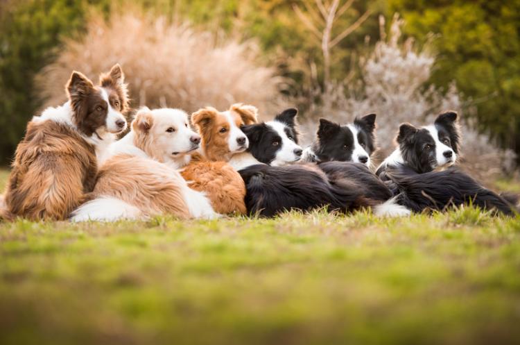 Топ-10 світлин із Всесвітнього фотоконкурсу собак у 2018 році