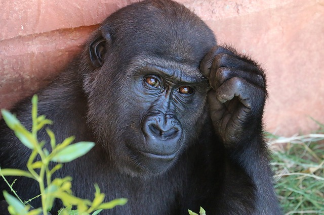 Топ-10 найрозумніших тварин у світі