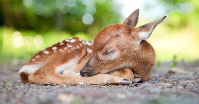 Топ-10 наймиліших дитинчат тварин