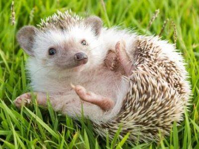 Топ-10 наймиліших дитинчат тварин: ви не зможете не посміхнутися