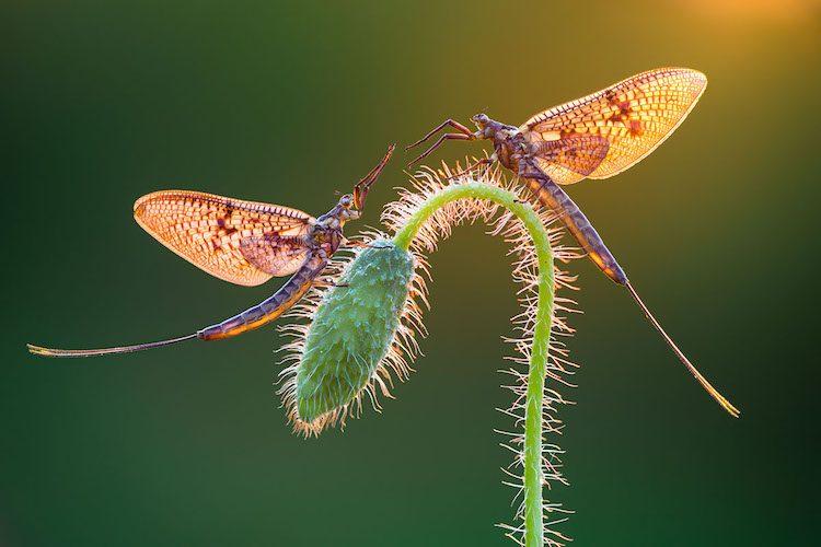 Переможці конкурсу макрофотографії International Garden Photographer