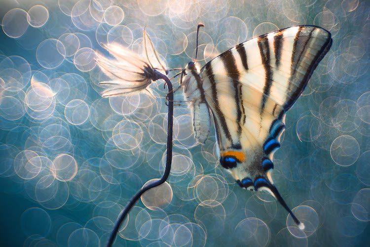 Особлива відзнака на конкурсі макрофотографії International Garden Photographer