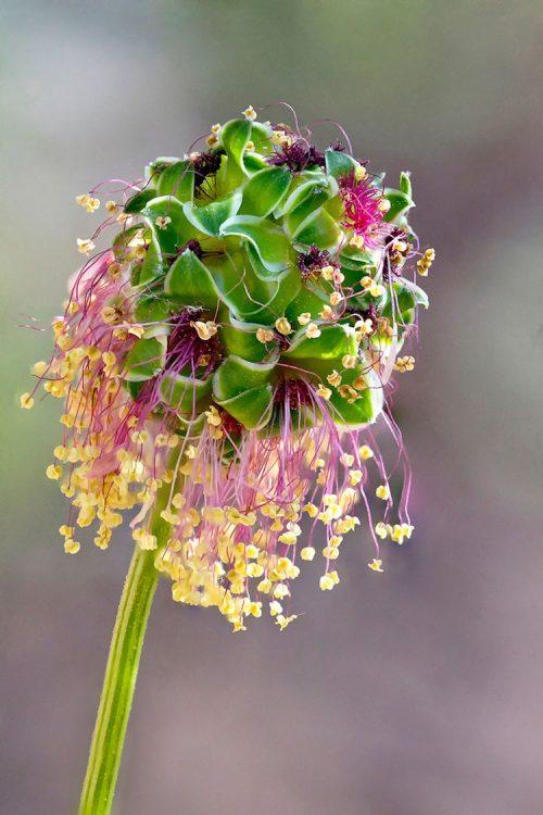 Переможці міжнародного конкурсу макрофотографії International Garden Photographer (ФОТО)