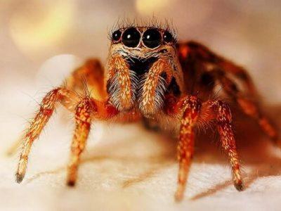 Топ-10 самых жутких пауков в мире