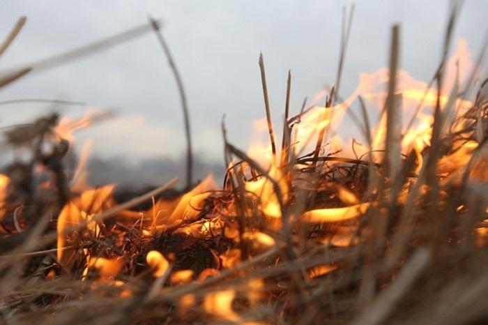 горить трава