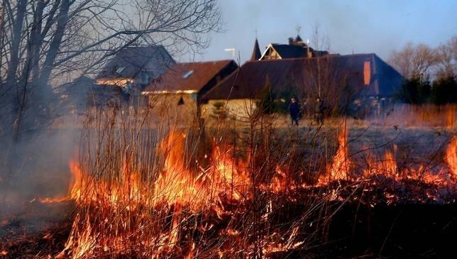 Чим небезпечне спалювання трави?