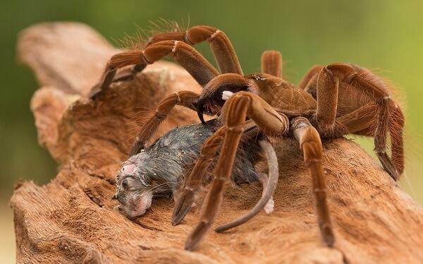 Топ-10 найстрашніших павуків у світі