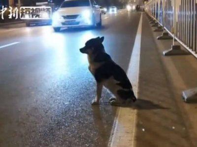 Собака чекає свою господиню на місці її загибелі