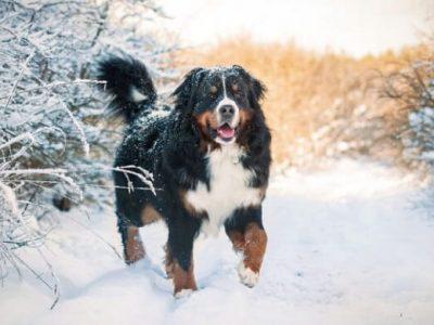 Топ-10 найкрасивіших порід собак