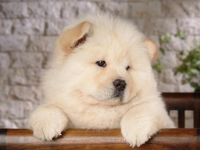 Найкрасивіші породи собак