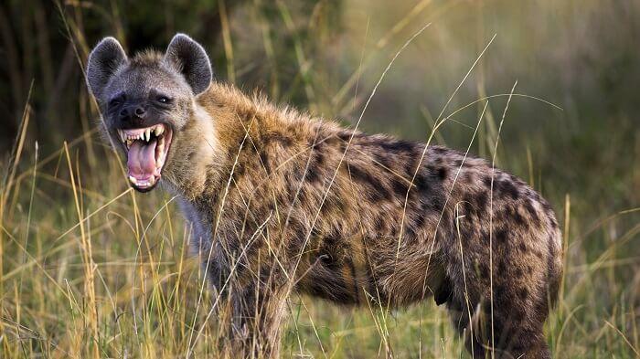 Топ-10 найгучніших тварин у світі