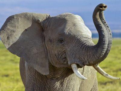 Топ-10 самых громких животных в мире