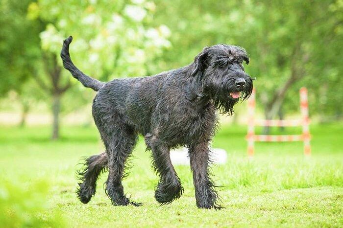 10 кращих сторожових порід собак