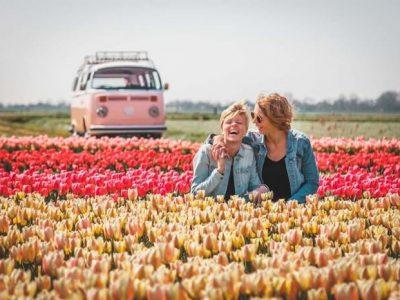 Топ-7 найкрасивіших квіткових полів у світі