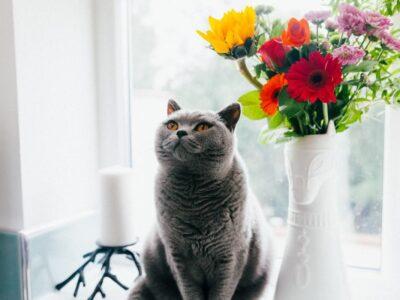 ТОП 10 цікавинок про котів, які викличуть неабиякий подив