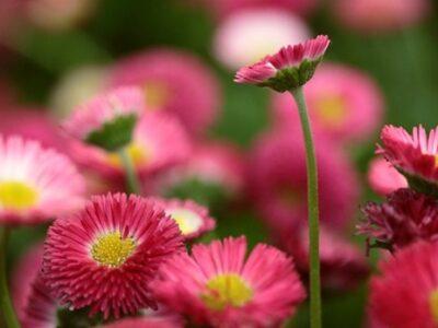 10 літніх квітів, які повинні цвісти у кожному саду