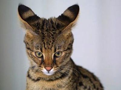 Топ 5 самых интересных фактов о диких животных