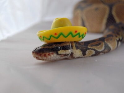 Небезопасный отдых: топ 5 самых смертоносных змей в мире
