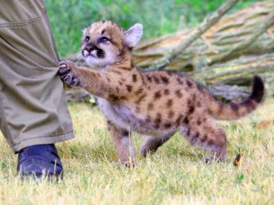 Вони завжди поруч: топ 5 найбільш небезпечних тварин