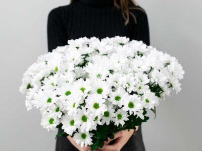 Зимовий сад…Топ 5 найкрасивіших осінньо-зимових квітів