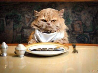 Чому ваш кіт постійно їсть? Топ 5 причин голоду