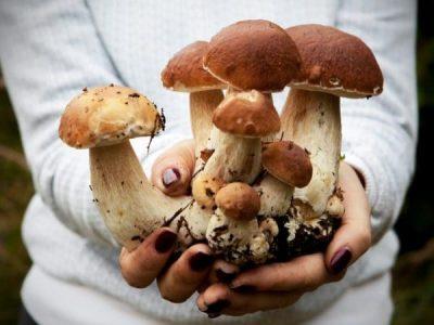 Взимку з кошиком: Топ 5 зимових грибів