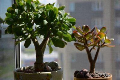 Топ 5 домашніх рослин, які люблять тінь