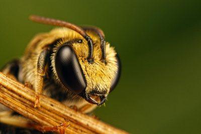 Не медом єдиним – топ 10 фактів про користь бджіл