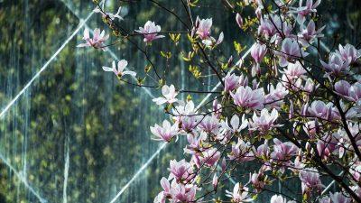 10 фактів про весну. Вітер змін або пора пробуджень