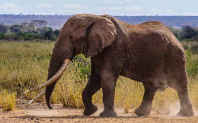 ТОП 10 найрозумніших тварин у світі
