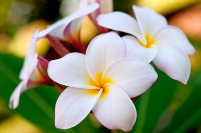 ТОП 10 найрідкісніших квітів, яких ви ніколи не бачили