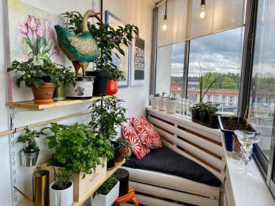 Врожай у квартирі – 7 овочів, які можна виростити в горщику
