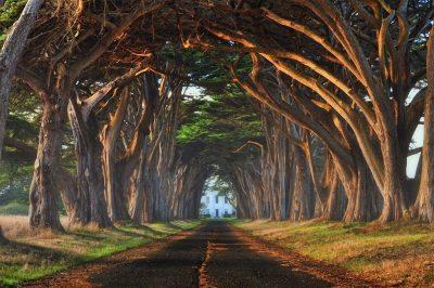 ТОП 10 найдивовижніших тунелів з дерев