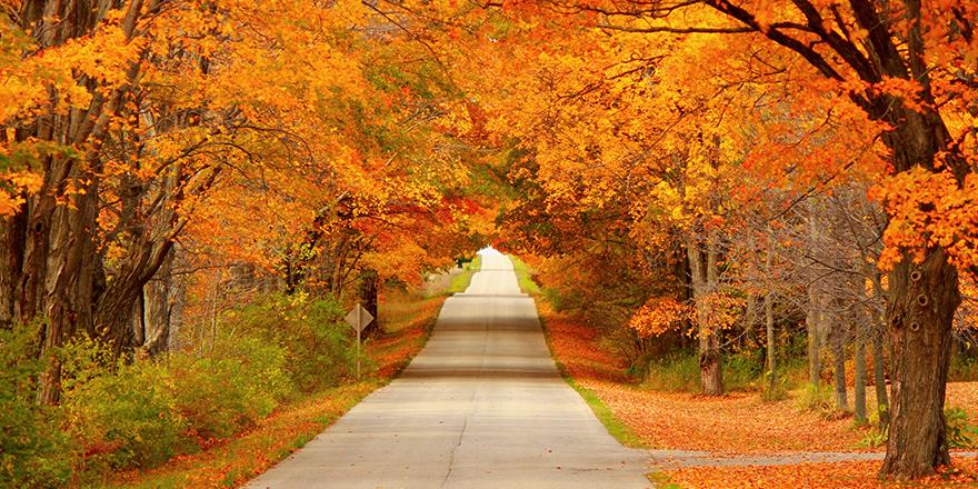 autumn-tunel