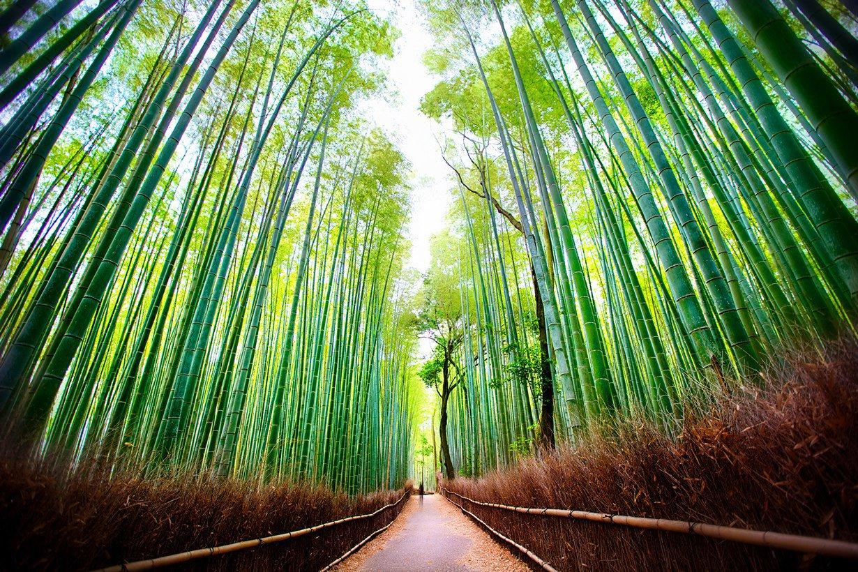 bambuk-tunel