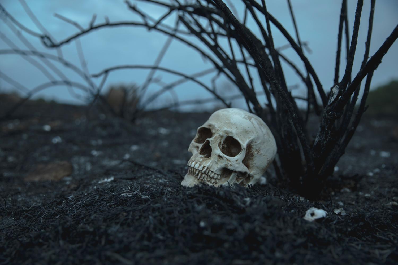 skull-memento-mori