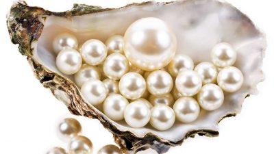Дари моря або як та чому зароджуються перли